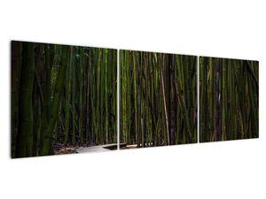 Obraz - Medzi bambusy (V021324V15050)