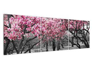 Obraz stromů Magnolíie (V021344V15050)