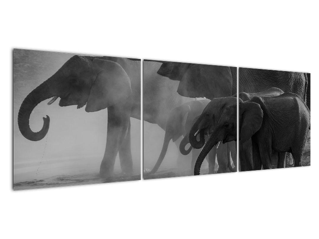 Obraz slonů - černobílý (V021575V15050)