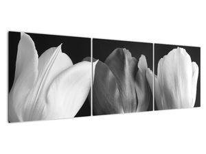Kép - fekete-fehér tulipán virág (V021916V15050)