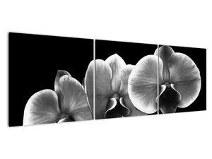 Obraz květu orchideje (V022015V15050)