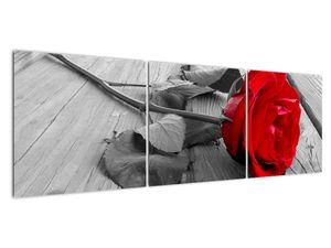 Slika crvene ruže (V022288V15050)