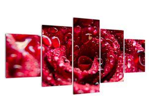 Obraz květu červené růže (V020009V150805PCS)
