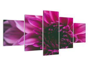 Obraz růžového květu (V020010V150805PCS)