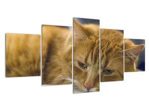 Obraz kočky (V020089V150805PCS)