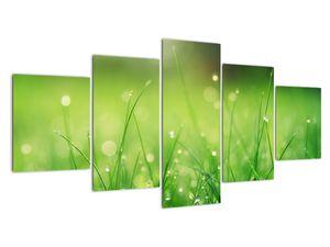 Obraz - rosa na trávě (V020169V150805PCS)