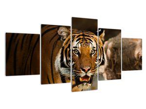 Obraz tygra (V020183V150805PCS)