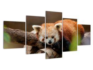 Obraz pandy červené (V020184V150805PCS)