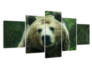 Obraz medvěda (V020185V150805PCS)