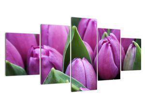 Obraz - květy tulipánů (V020194V150805PCS)