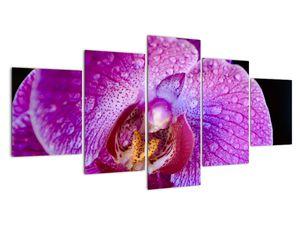 Detailní obraz květu orchideje (V020314V150805PCS)