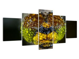 Detailní obraz očí hmyzu (V020320V150805PCS)