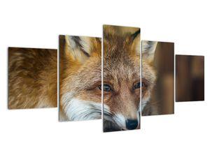 Obraz lišky (V020323V150805PCS)