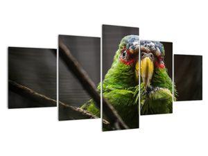 Obraz papouška (V020325V150805PCS)