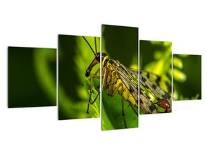 Obraz hmyzu (V020326V150805PCS)