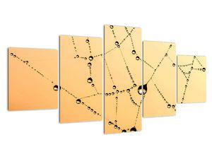 Obraz orosené pavučiny (V020356V150805PCS)
