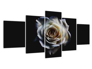 Obraz bílé růže (V020370V150805PCS)