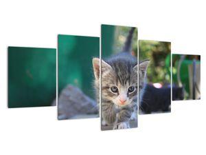 Obraz koťátka (V020380V150805PCS)