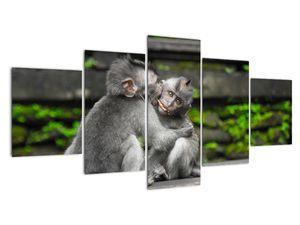 Obraz - opičky (V020382V150805PCS)