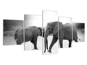 Obraz - černobílí sloni (V020398V150805PCS)