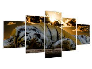 Obraz spícího tygra (V020408V150805PCS)