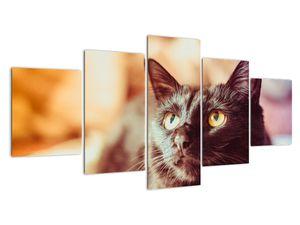 Obraz černé kočky (V020410V150805PCS)