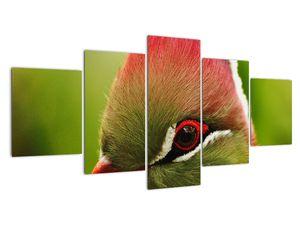 Obraz barevného ptáka (V020436V150805PCS)
