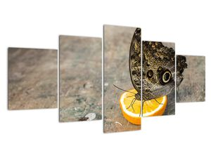 Obraz motýla (V020454V150805PCS)