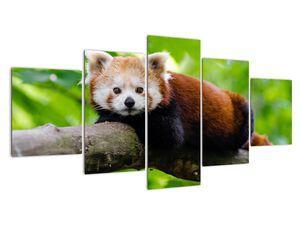 Obraz pandy červené (V020455V150805PCS)