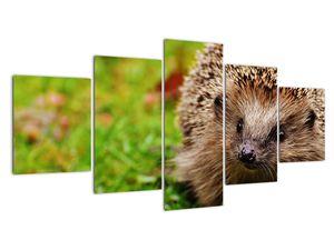 Obraz ježka (V020459V150805PCS)