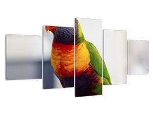 Obraz papouška (V020466V150805PCS)