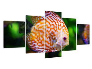 Obraz ryby (V020473V150805PCS)