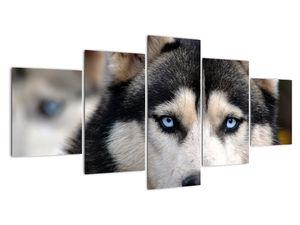 Obraz psa husky (V020526V150805PCS)