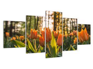 Obraz - oranžové tulipány (V020552V150805PCS)