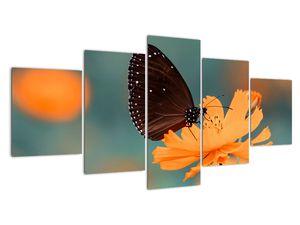 Obraz - motýl na oranžové květině (V020577V150805PCS)