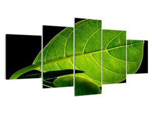Obraz - zelený list (V020628V150805PCS)
