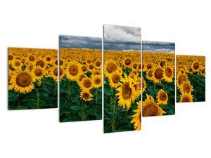 Obraz slunečnicového pole (V020662V150805PCS)