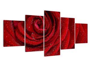 Obraz - detail růže (V020684V150805PCS)