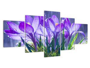 Obraz květin v dešti (V020707V150805PCS)