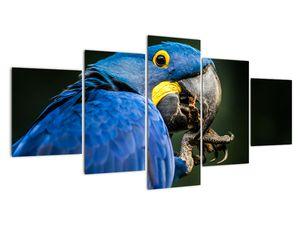 Obraz papouška (V020714V150805PCS)
