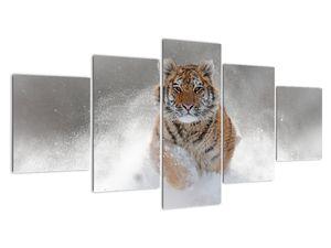 Obraz běžícího tygra ve sněhu (V020719V150805PCS)