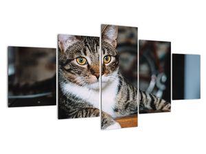 Obraz kočky (V020889V150805PCS)
