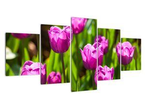 Obraz tulipánov na lúke (V020893V150805PCS)