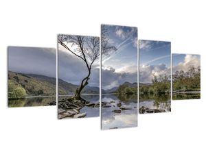 Obraz řeky se stromem (V020917V150805PCS)