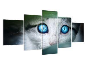Obraz kočky (V020944V150805PCS)
