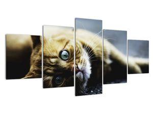 Obraz kočky (V020963V150805PCS)