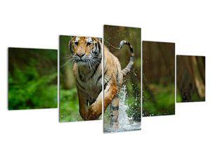 Obraz běžícího tygra (V020979V150805PCS)