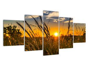 Obraz pole při západu slunce (V021001V150805PCS)