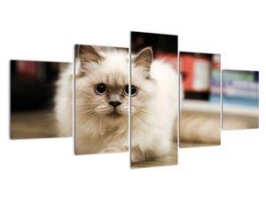 Obraz bílé kočky (V021124V150805PCS)