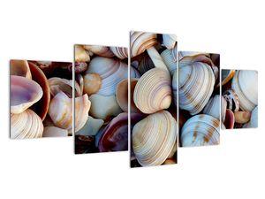 Kagyló képe (V021131V150805PCS)
